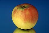 An Elstar Apple