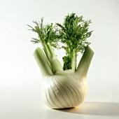 A fresh fennel bulb with foliage