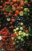 Various types of berries