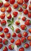 Erdbeeren, einzeln aufgelegt mit einigen Blüten & Blättern