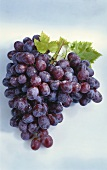 A Large Bunch of Purple Grapes