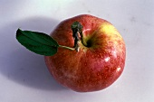 A Single Gala Apple