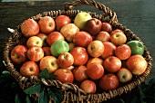 Wicker Basket Full of Apples