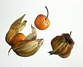 Two Cape Gooseberries