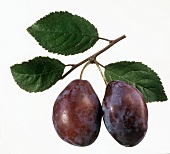 A Pair of Purple Plums