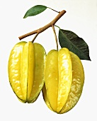 Two Star Fruit with Branch