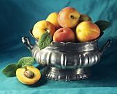 Mehrere Aprikosen in Zinnschale & einzelne halbierte Aprikose