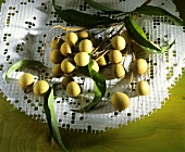 Branches with longan fruits