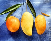 Drei Mangos verschiedener Grösse & Farbe