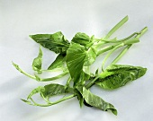 Asian water spinach (a few stalks with leaves)