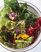 Mixed salad leaves with flowers & sprouts in lettuce spinner