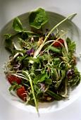 Frühling-Salat aus Wildkräutern, Sprossen, Erdbeeren