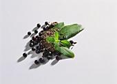 Juniper berries, caraway and bay leaves