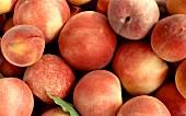 Lots of peaches, various varieties (close-up)