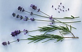 Lavender, a few stalks with leaves & flowers