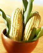 Two Corn Cobs in a Flower Pot