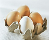 Assorted Eggs in the Carton