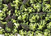 Lots of broccoli florets (close-up)