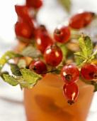 Rose hip twigs in a beaker