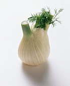 Fennel with foliage on white background