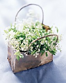 Woodruff with flowers in a paper bag