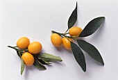 Kumquats on Branches