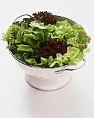 Assorted Lettuce in a Strainer