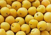 Viele gelbe Pflaumen mit Wassertropfen (bildfüllend)