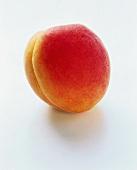 A Single Apricot