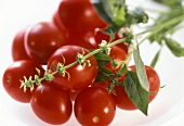 Fresh Ripe Tomatoes; Soft Focus
