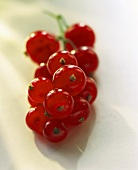 A Bunch of Red Currants