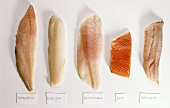 Fillets; red perch, cod, salmon, coley, Nile perch