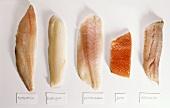 Fillets; red perch, cod, salmon, coley, Nile perch