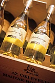 Chardonnay bottles from Hungary in wine rack
