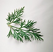 A sprig of dill on light background