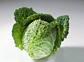 A savoy cabbage with drops of water on a light background