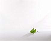 A four-leaf clover on a light background