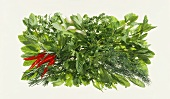Herb arrange with chili peppers in rectangular dish