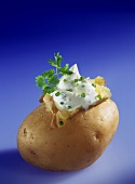 Jacket Potato with Herb Quark on Blue Background