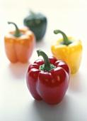 Paprikaschoten (je eine rot, gelb, grün und orangefarben)