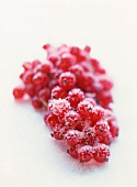 A Bunch of Red Currants with Sugar