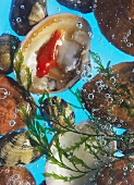 Various shells in bubbling water with seaweed