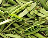 Erbsenschoten, teilweise geöffnet, und grüne Bohnen