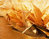 Fresh Corn on the Cob; Husks Pulled Back