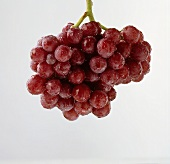 A Bunch of Wet Red Grapes