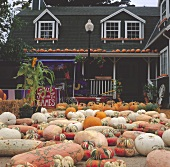 Colourful pumpkins in front of a pumpkin farm in America
