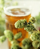 Hops in front of a glass of beer