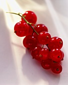 A truss of redcurrants
