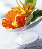 Nasturtium flowers in a bowl