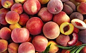 Various types of peach (filling the picture)